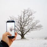 The Old Oak # trees #Ås